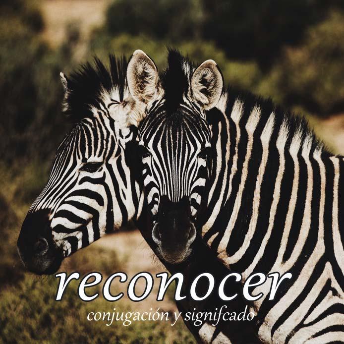 スペイン語の動詞 reconocer「見分ける、認める」の活用と意味【例文あり】