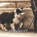 スペイン語の動詞 obedecer「従う、起因する」の活用と意味【例文あり】