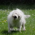 スペイン語の動詞 sacudir「揺さぶる、はたく」の活用と意味【例文あり】