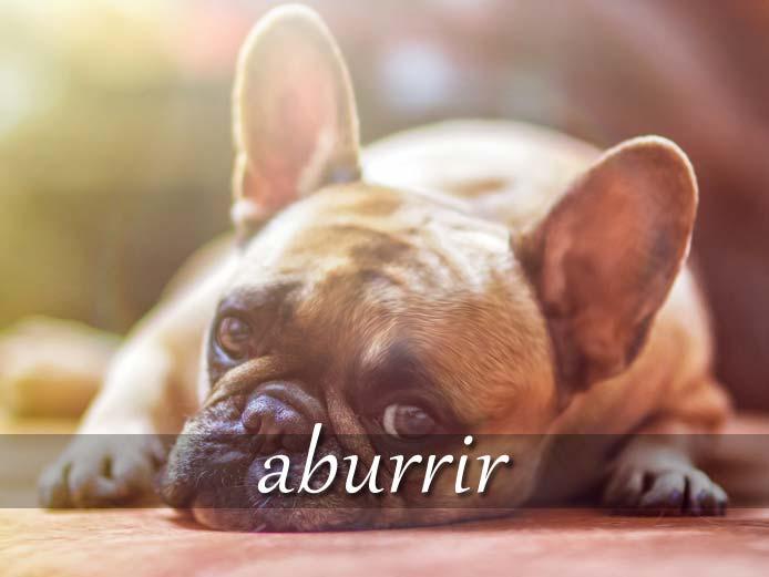 スペイン語の動詞 aburrir「退屈させる、うんざりさせる」の活用と意味【例文あり】