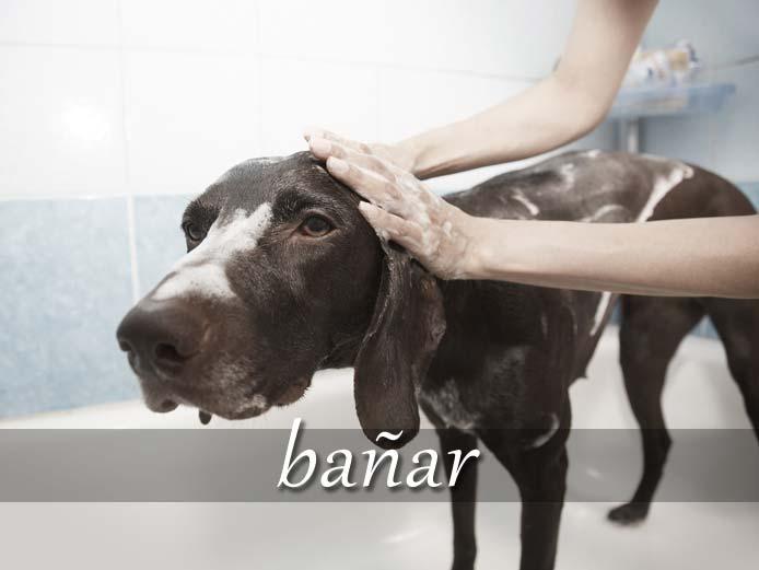 スペイン語の動詞 bañar「入浴させる、浸す」の活用と意味【例文あり】