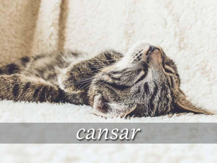 スペイン語の動詞 cansar「疲れさせる、飽きさせる」の活用と意味【例文あり】