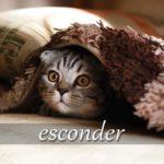 スペイン語の動詞 esconder「隠す、秘める」の活用と意味【例文あり】