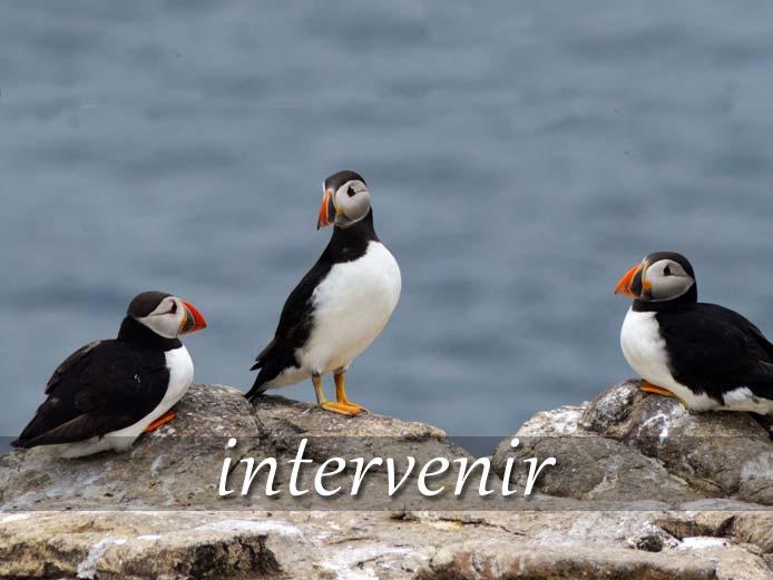 スペイン語の動詞 intervenir「参加する、干渉する」の活用と意味【例文あり】