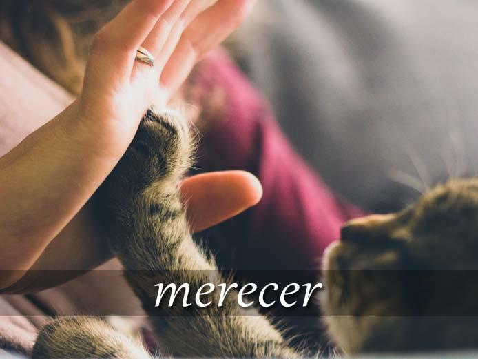 スペイン語の動詞 merecer「~に値する、ふさわしい」の活用と意味【例文あり】