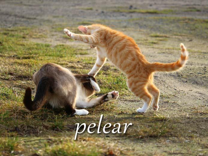 スペイン語の動詞 pelear「けんかする、戦う」の活用と意味【例文あり】
