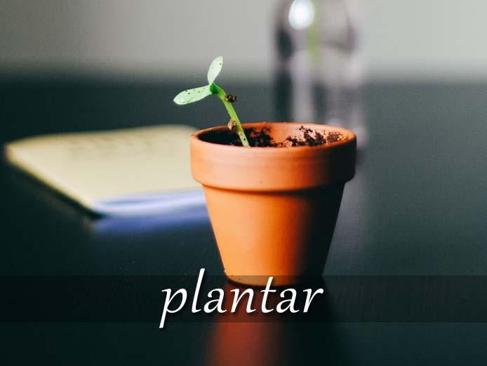 スペイン語の動詞 plantar「植える」の活用と意味【例文あり】