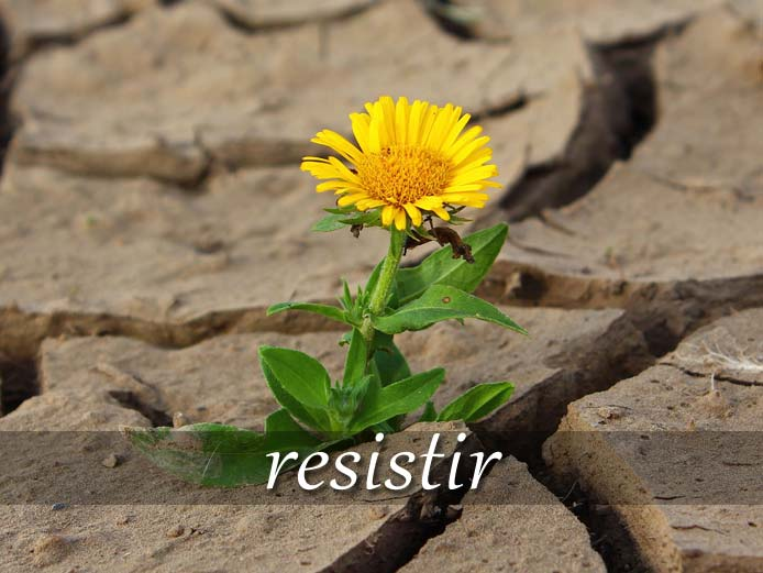 スペイン語の動詞 resistir「耐える、我慢する」の活用と意味【例文あり】
