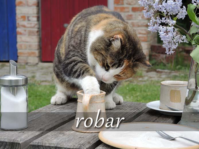 スペイン語の動詞 robar「盗む、泥棒する」の活用と意味【例文あり】
