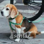 スペイン語の動詞 sentar「座らせる、似合う」の活用と意味【例文あり】